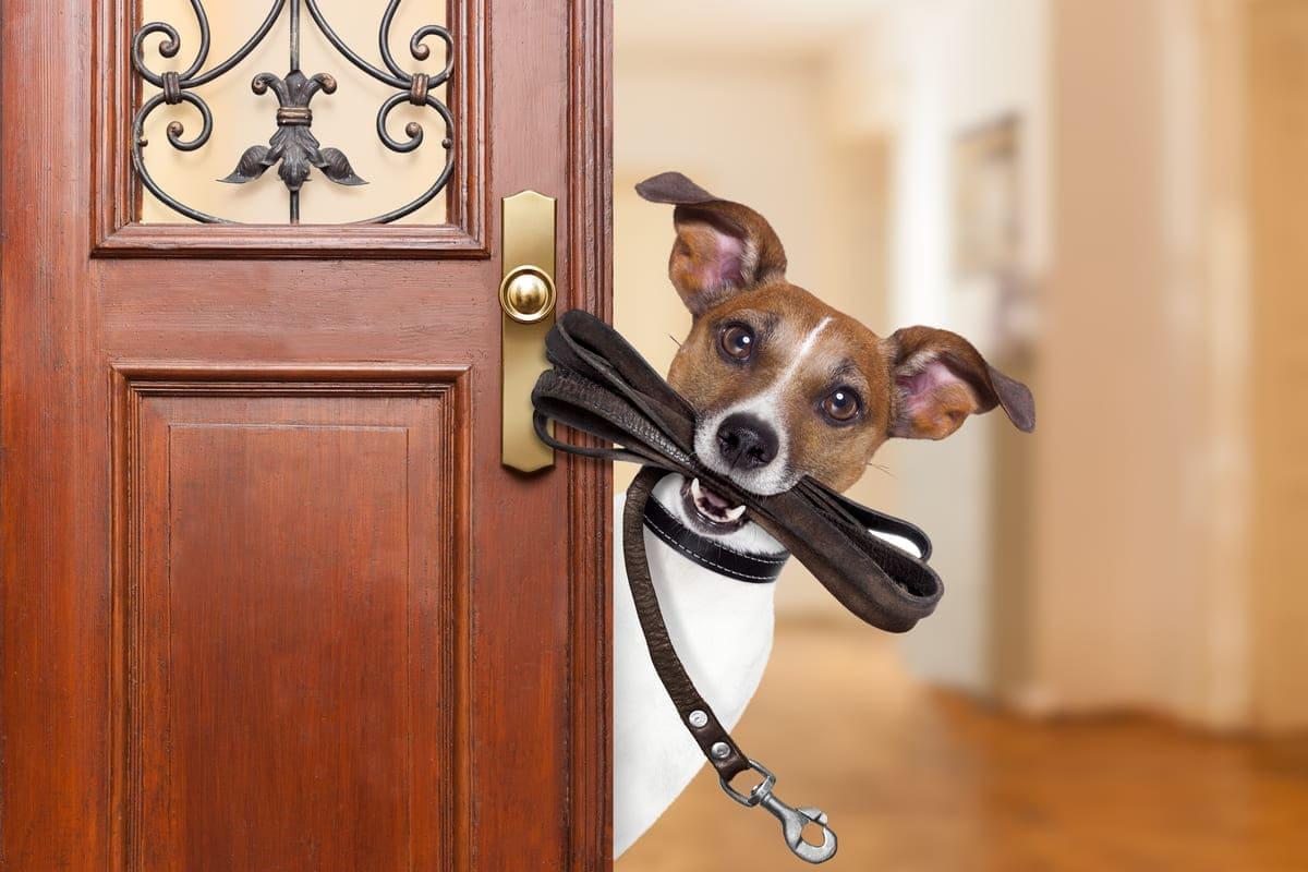 Die besten 6 Hundeleinen: Unser Kaufratgeber