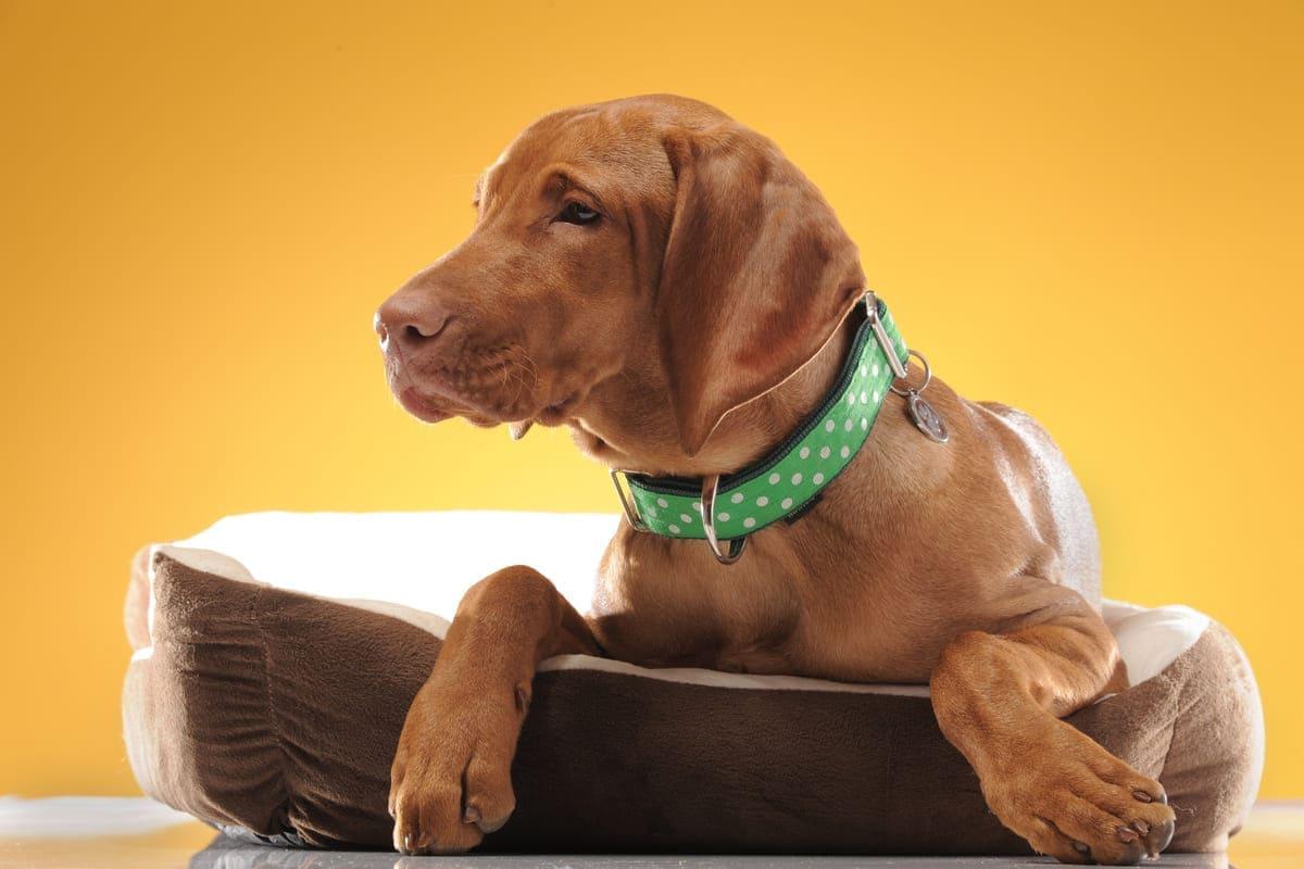 Die besten Halsbänder für Deinen Hund