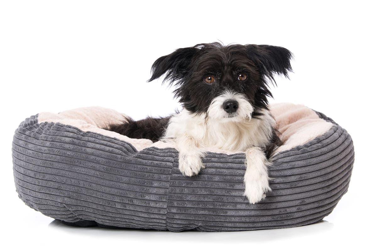 Die besten Hundebetten: unser Kaufratgeber