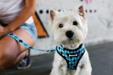 Hundegeschirr - Finde das beste Brustgeschirr für Deinen Hund