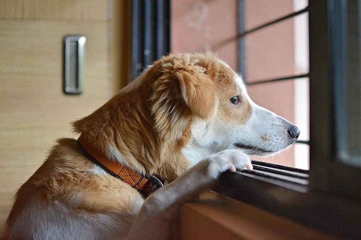 Den Hund alleine lassen