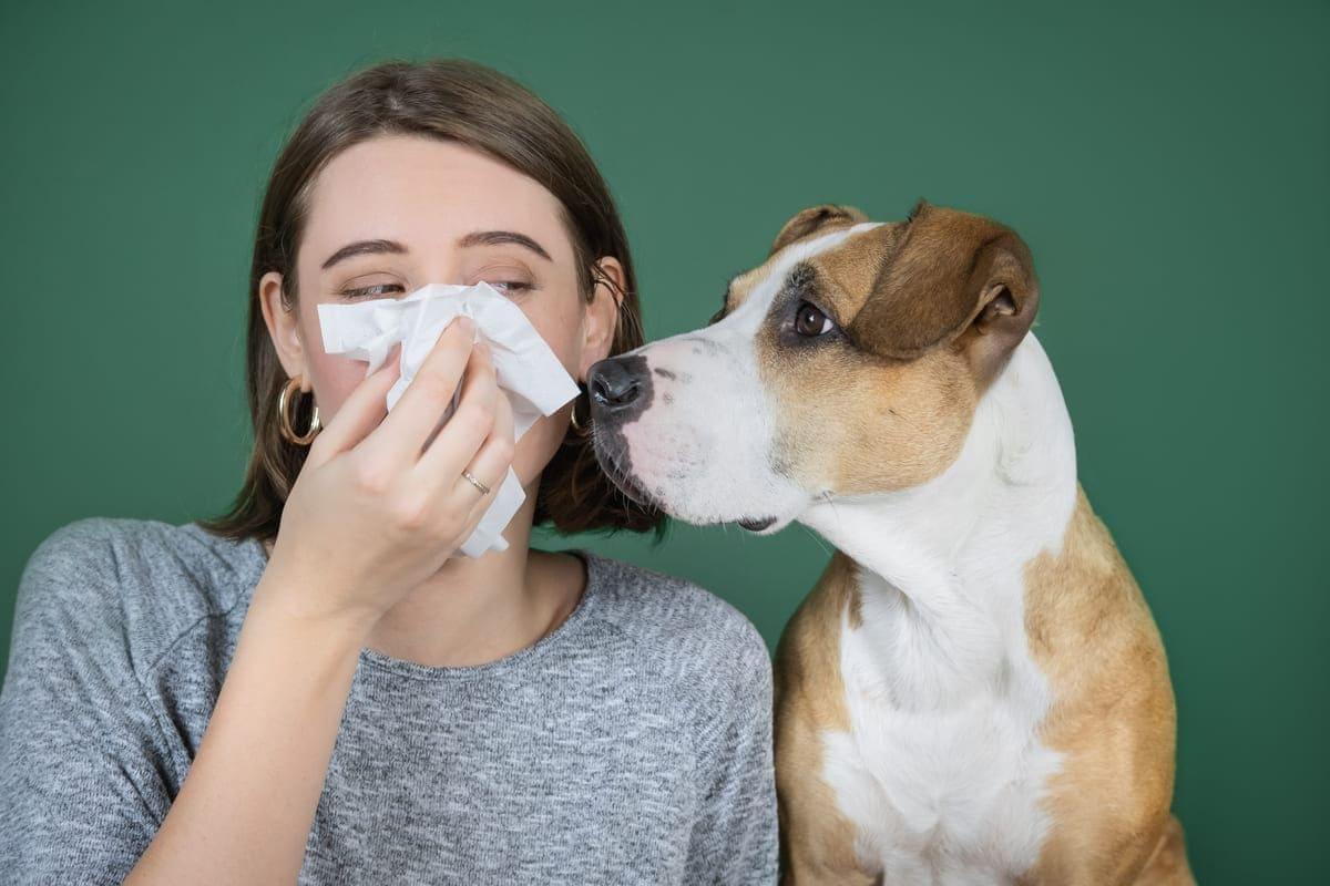 Hunde für Allergiker: Drei Hunderassen im Überblick