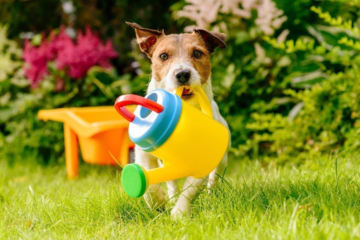 Hunde für Anfänger - Die besten Tipps