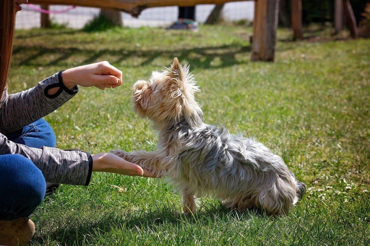 Hundeerziehung ohne Stress - die wichtigsten Tipps