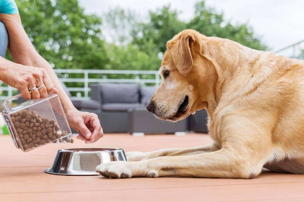 Was dürfen Hunde nicht essen - Was ist wirklich giftig