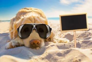 Woran erkennt man eine gute Hundepension