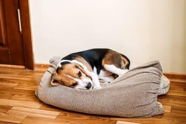 Durchfall beim Hund - Ursachen kennen und für Heilung sorgen