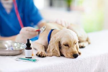 Hund erbricht: Ursachen, Anzeichen und Behandlung