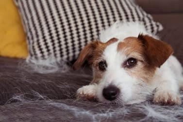 Hunde, die nicht haaren: Was Hundefreunde wissen sollten