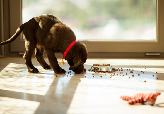 Dürfen Hunde Nüsse essen
