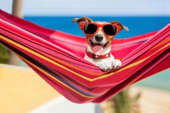 Urlaubszeit: Woran man eine gute Hundepension erkennt