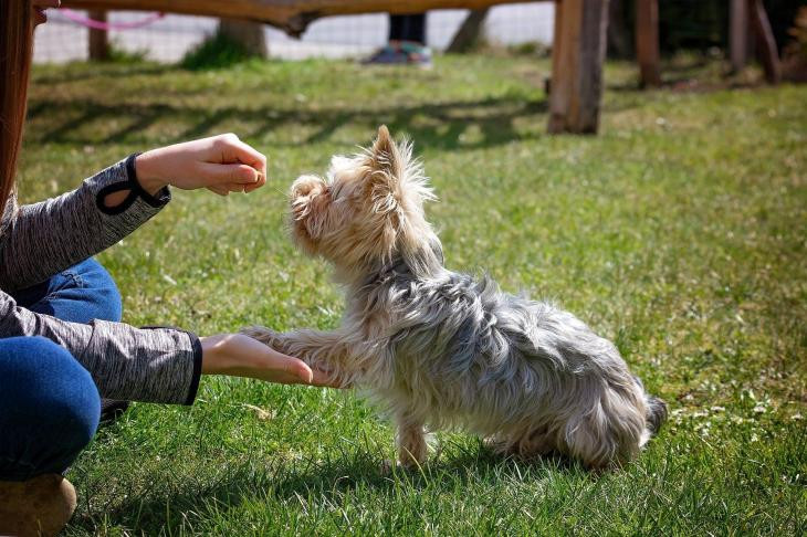 Hundeerziehung - darauf kommt es an